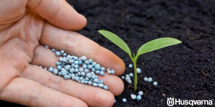 fertilizar-planta